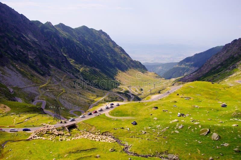 Transfagarasan山风景绵羊横穿 免版税库存图片