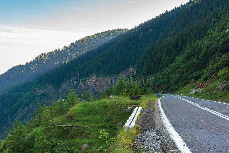 Transfagarasan road at sunrise stock image