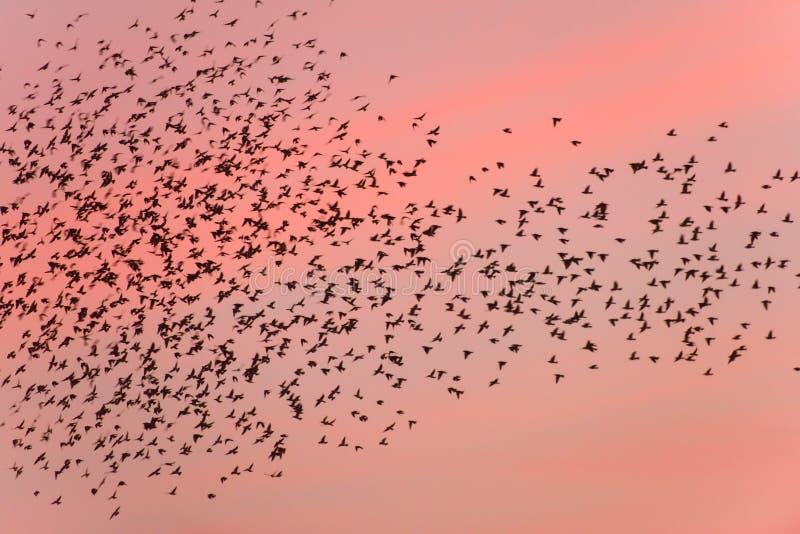 Transfert d'oiseau au coucher du soleil photos stock