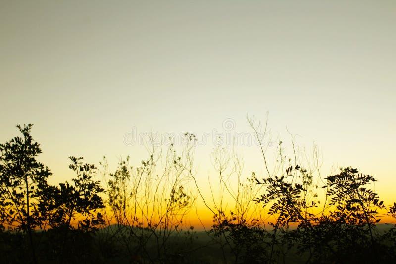 a transformação da natureza na noite fotografia de stock