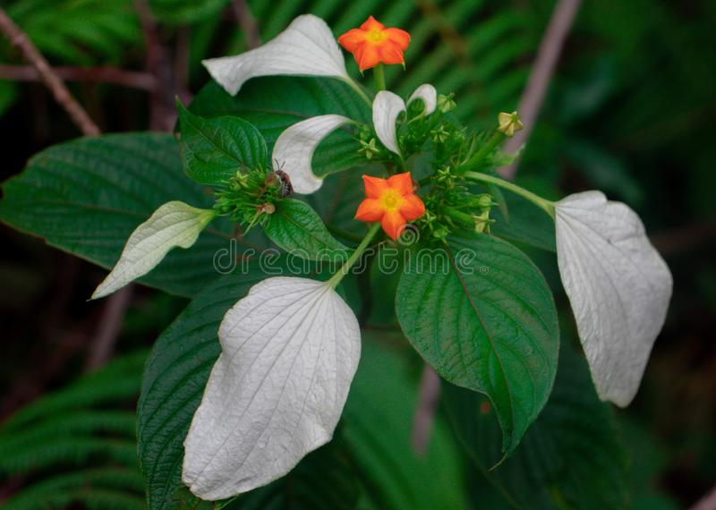 Transformatie van bloem aan blad royalty-vrije stock foto's