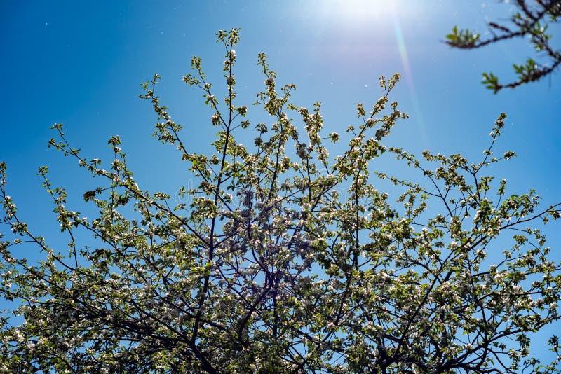 Transformation de ressort, - belles fleurs de ressort Le ressort est venu et toute la nature s'est d?velopp?e La Russie photographie stock libre de droits