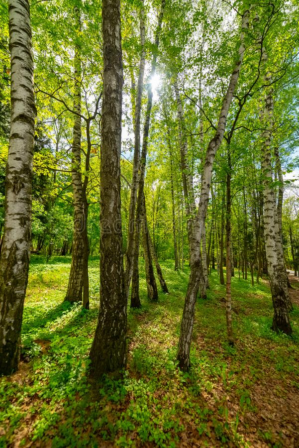 Transformation de ressort, parcs naturels à l'ENEA image stock