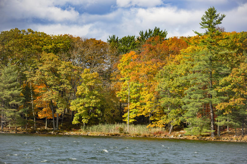 Transitioning Fall Trees by a Lake royalty free stock images