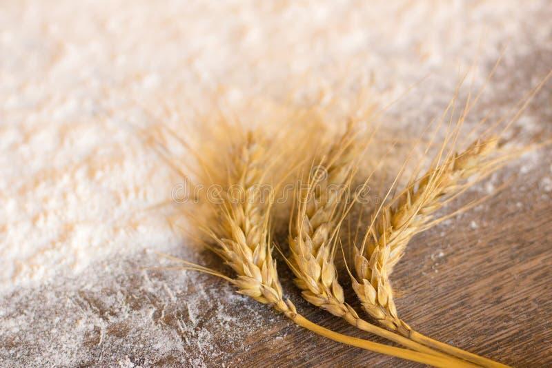 Transitoires de blé et de farine photographie stock libre de droits