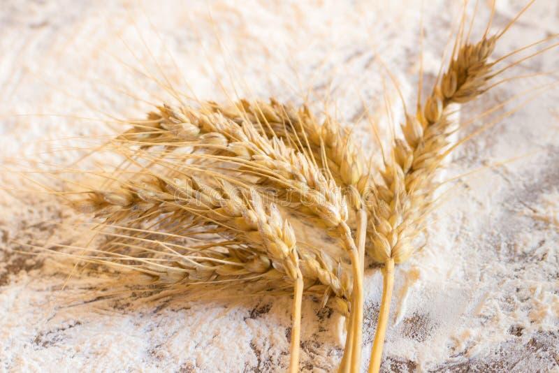 Transitoires de blé et de farine photographie stock