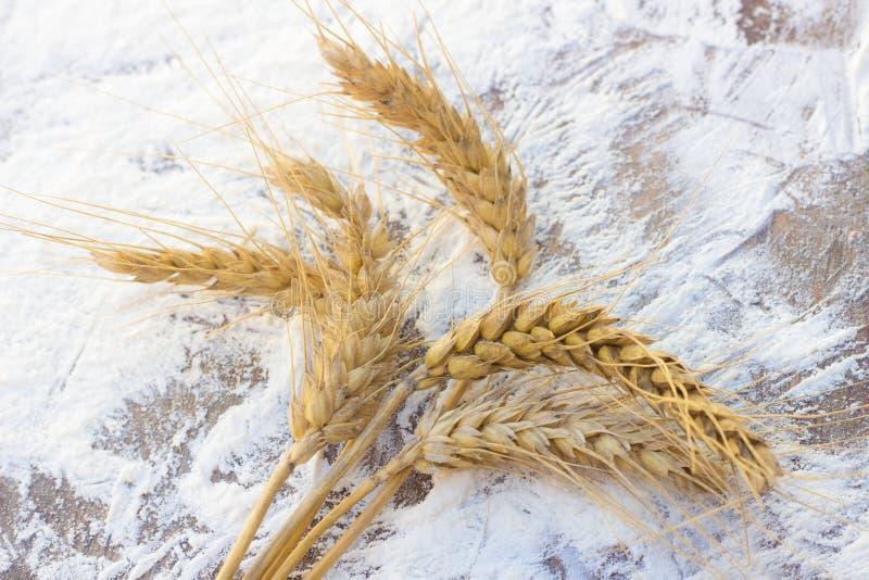 Transitoires de blé et de farine photo stock