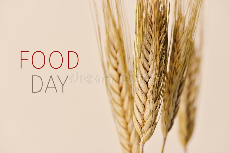 Transitoires de jour et de blé de nourriture des textes photos stock