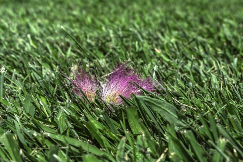 Transitoires minuscules d'une fleur photographie stock libre de droits