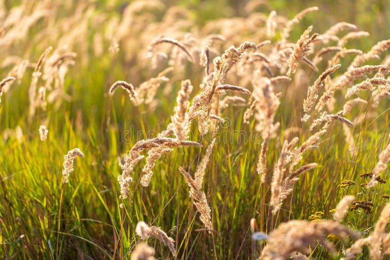 Transitoires sur l'herbe en nature comme fond photos stock