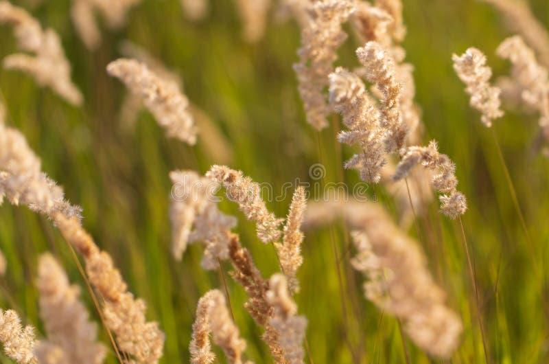 Transitoires sur l'herbe en nature comme fond photographie stock libre de droits