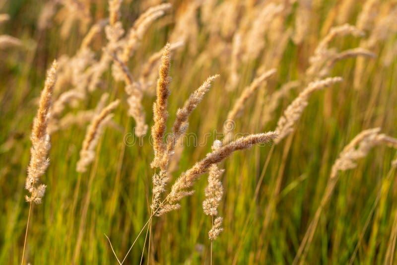 Transitoires sur l'herbe en nature comme fond photo stock