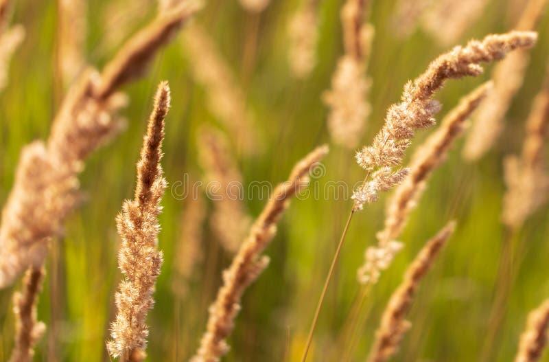 Transitoires sur l'herbe en nature comme fond images stock