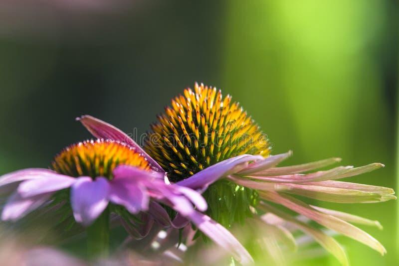 Transitoires sur une fleur images stock
