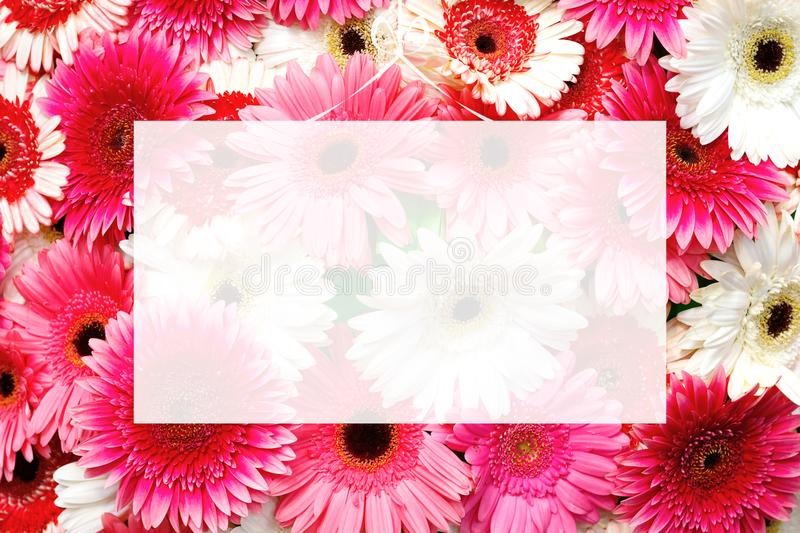 Translucent blank greeting card on selection of various colorful gerbera flowers background royalty free stock images