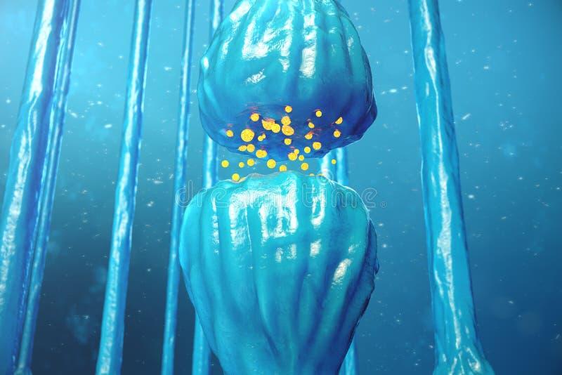 Transmisión sináptica, sistema nervioso humano Sinapsis del cerebro Sinapsis de la transmisión, señales, impulsos en el cerebro libre illustration