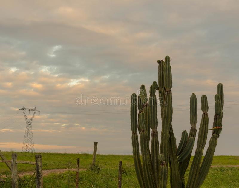 The green cacti and the energy tower. A transmission tower in the background and a cactus plant in the foreground. A wire fence enclosing the area of a farm. End stock image