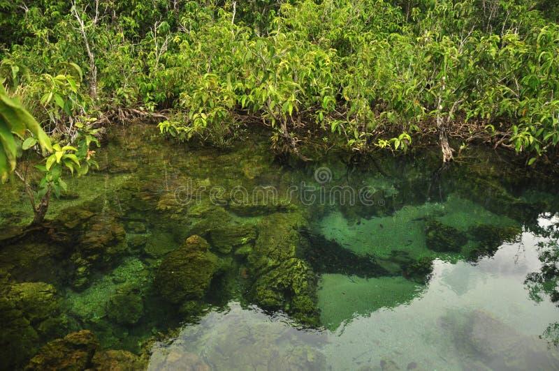 Transparant water in wilde tropische vijver of rivier, van boven schot van duidelijk water in klein meer met rond de wortels van  stock afbeeldingen