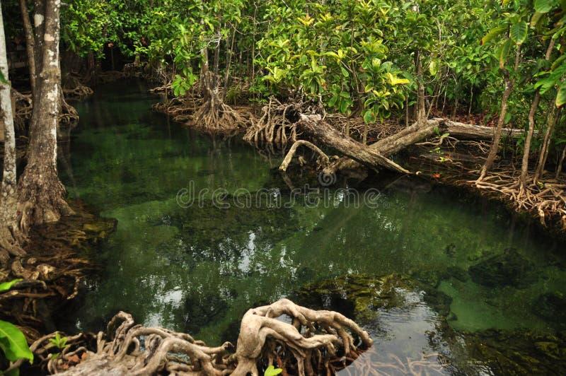 Transparant water in wilde tropische vijver of rivier, van boven schot van duidelijk water in klein meer met rond de wortels van  stock afbeelding