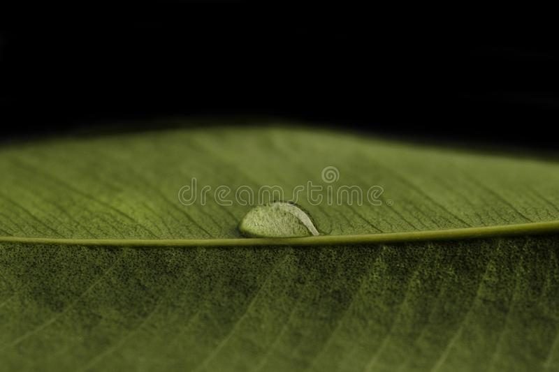 Transparent drop of water on a green leaf. Drop are sharp, macro closeup photo royalty free stock images