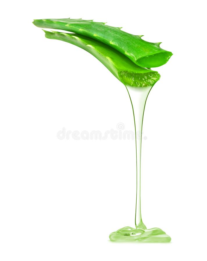 Transparent essence from aloe vera plant drips from stem. Isolated on white background stock photo