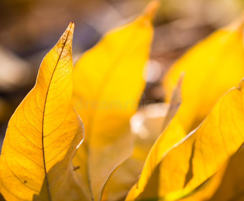 Download Transparent Leaves In Backlight Stock Photo - Image: 28228014