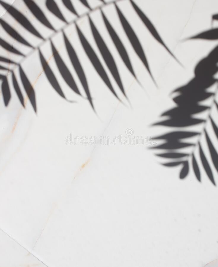 3 369 Tropical Leaves Transparent Background Photos Free Royalty Free Stock Photos From Dreamstime Tropical leaves free background free photo. dreamstime com