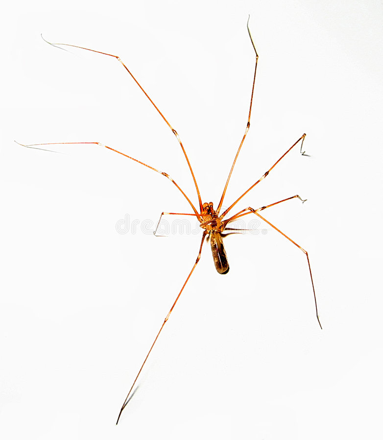 Transparent spider on white royalty free stock photos