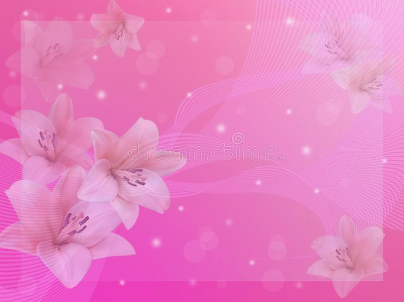 White lilies on a pink background. stock photos