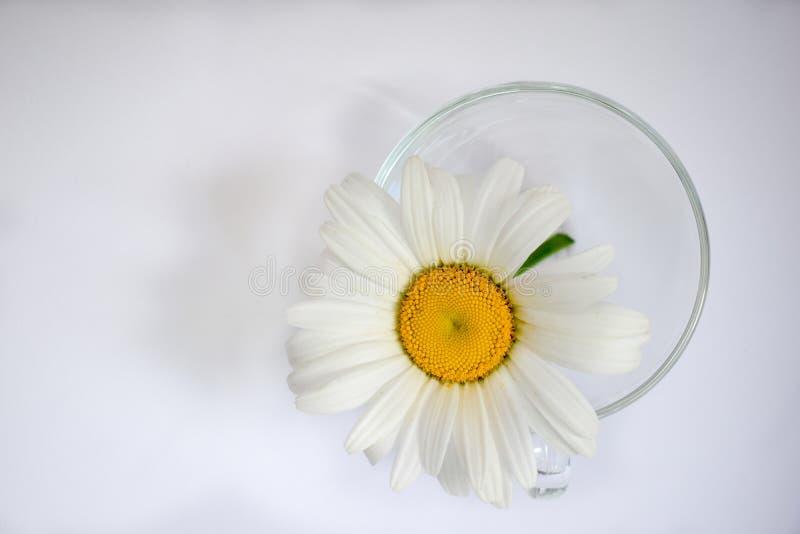 Transparente Glasschale mit Kamille 6 stockbild