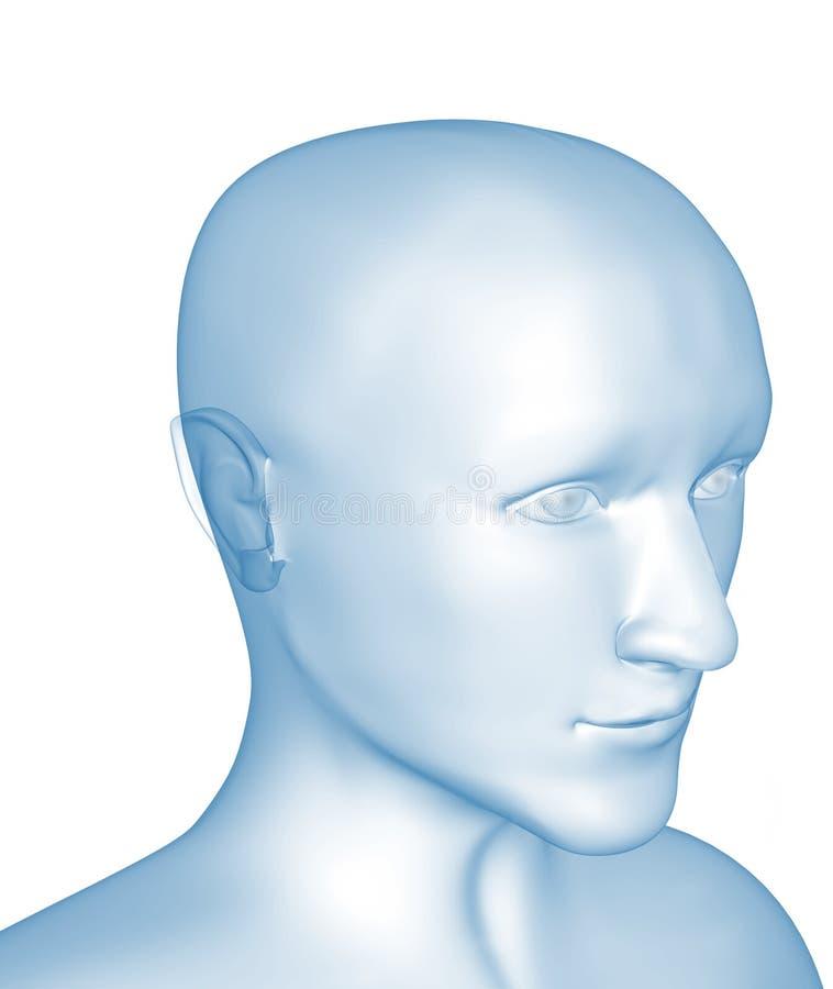Transparenter 3d Kopf des Mannes - Röntgenstrahl vektor abbildung