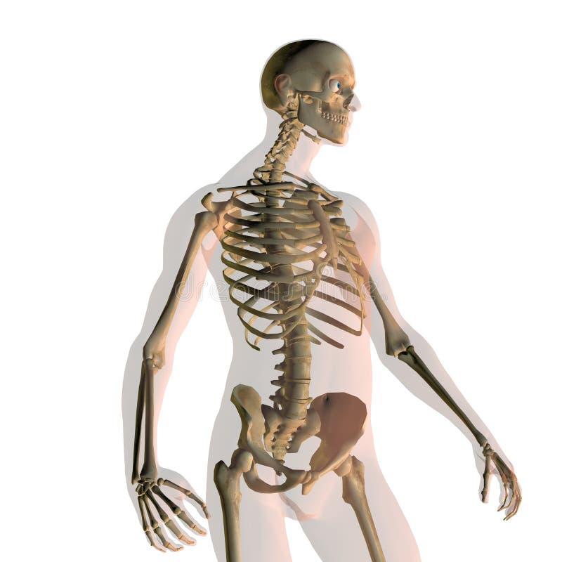 Ausgezeichnet Studie Hilfe Für Anatomie Und Physiologie ...