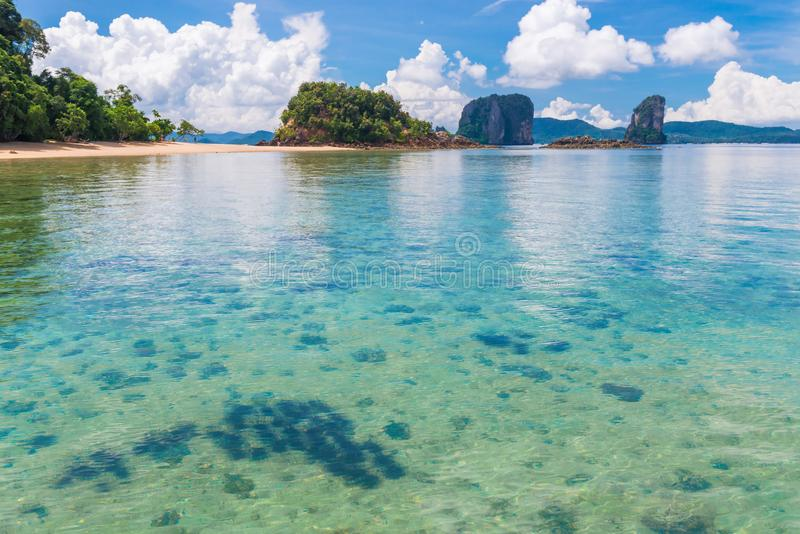 transparentes Meerwasser und eine Gruppe Seeigel im tropischen lizenzfreies stockfoto