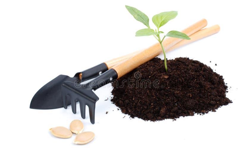 Transplantatie van een boom royalty-vrije stock foto