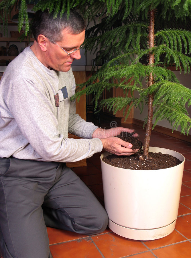Download Transplanting A Large Houseplant Stock Photo - Image of life, nature: 2082008