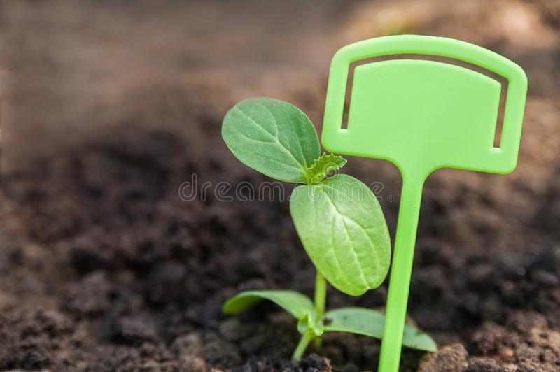 Transplanting plants illustration of procedures and tools for caring for indoor plants. Soil preparation. Care Of New Life - Water. Ing Young Plant. New life stock images