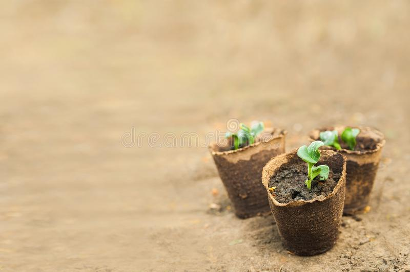 Transplanting plants illustration of procedures and tools for caring for indoor plants. Soil preparation. Care Of New Life - Water. Ing Young Plant. New life royalty free stock image