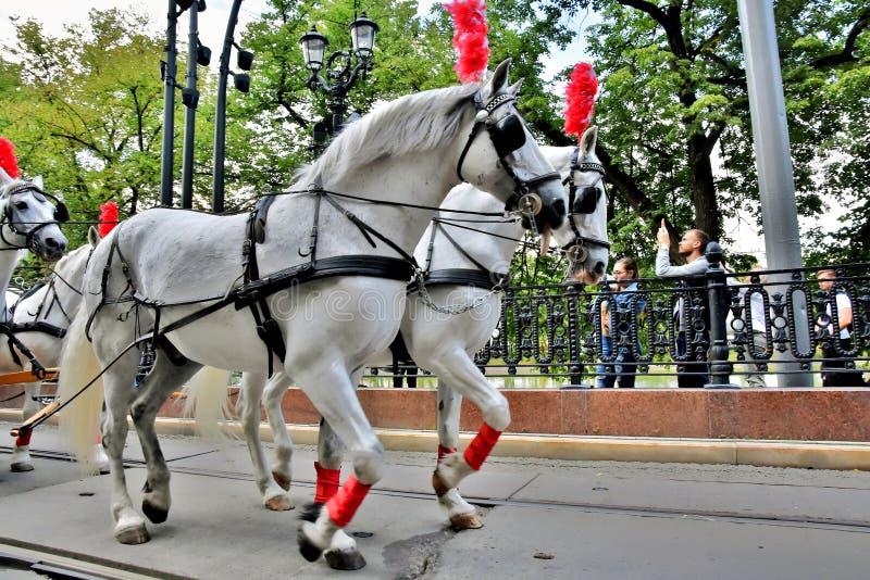 Transport Day-2019 de Moscou Les tramways défilent Chariot de chevaux photos libres de droits