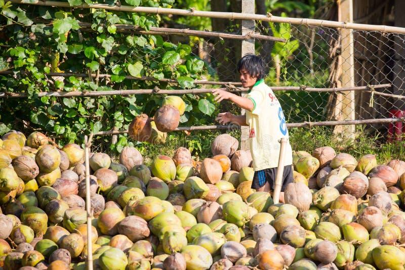 Transport des noix de coco au Vietnam image stock