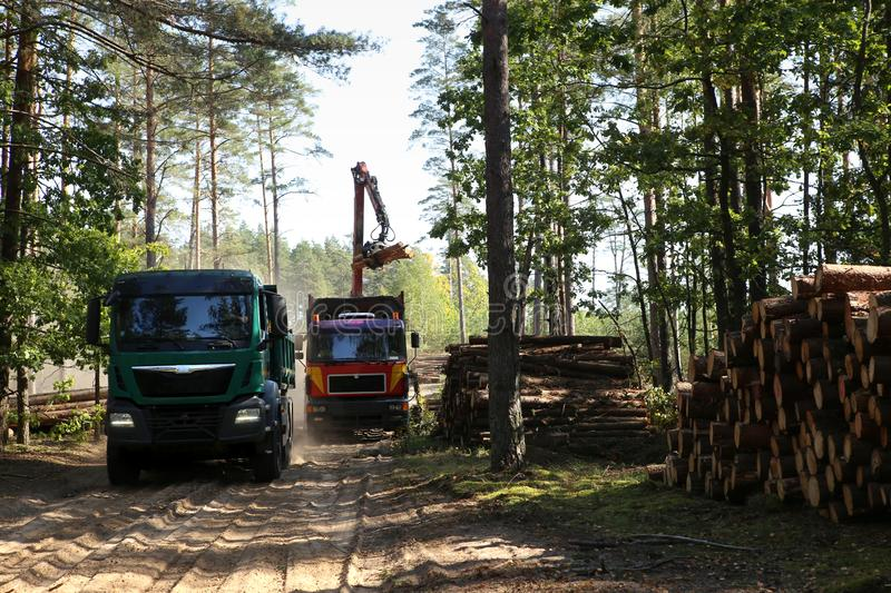 Timber harvesting and transportation in forest. stock images