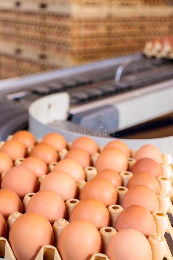 Transportband die kratten met verse eieren vervoeren royalty-vrije stock fotografie