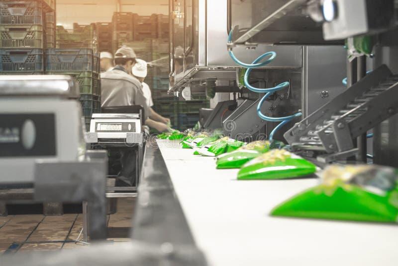 Transportband voor een zuivelfabriek, verpakkingsmelk in zakken royalty-vrije stock foto