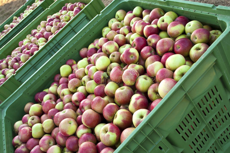 Transporte de Apple imagens de stock