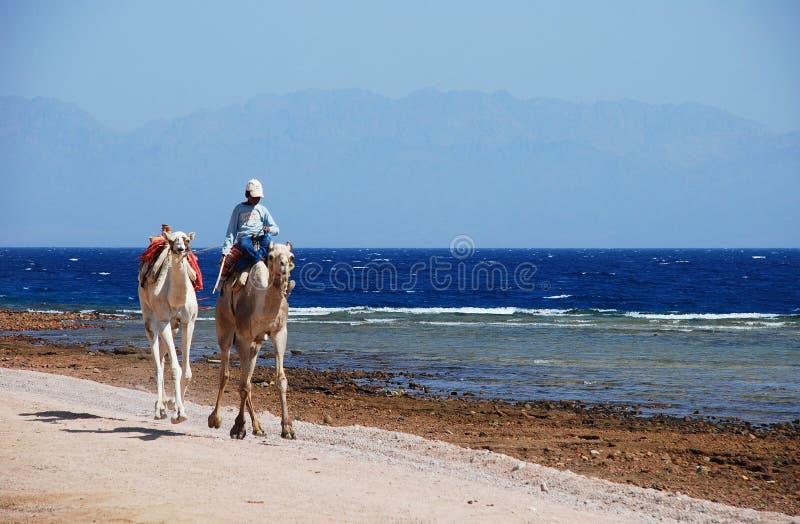 Transporte del eco de Sinaí foto de archivo