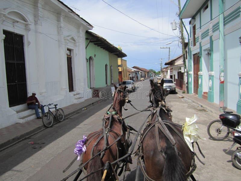 Transporte do cavalo foto de stock royalty free