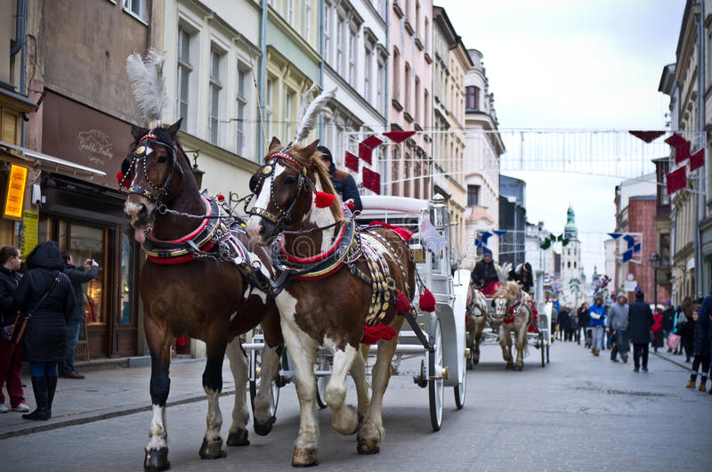 Transporte do cavalo em Cracow, Polônia fotos de stock royalty free