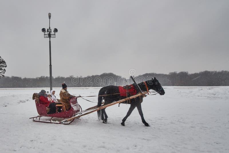 Transporte do cavalo em Moscou, Rússia fotografia de stock