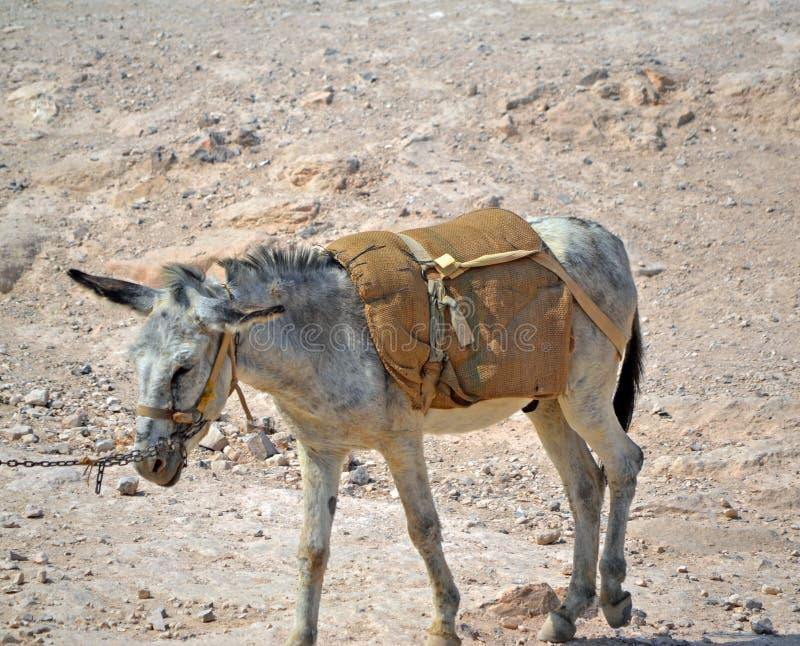 Transporte do deserto imagem de stock royalty free