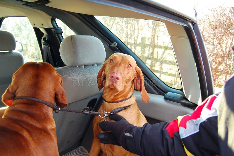 Transporte dos cães fotos de stock royalty free