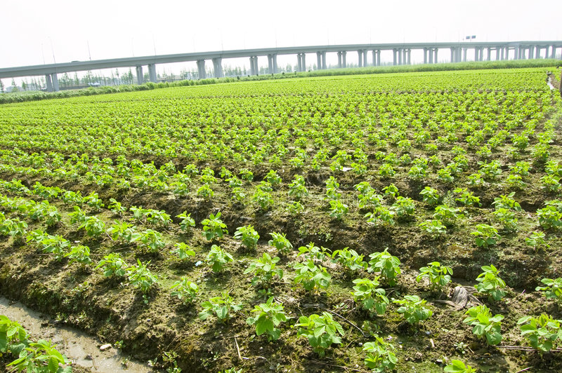 Transporte e agricultura foto de stock royalty free
